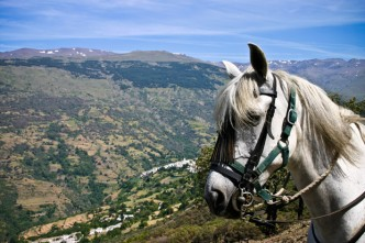 cheval-equitation-sierra-nevada-andalousie-espagne